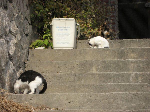 昌信洞のネコ