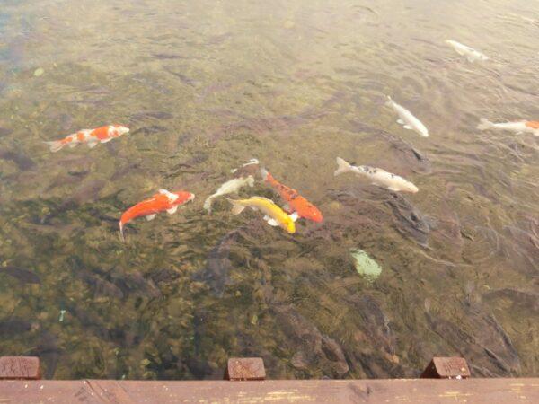 一山湖水公園