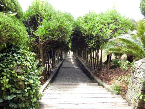 外島ボタニアの天国の階段