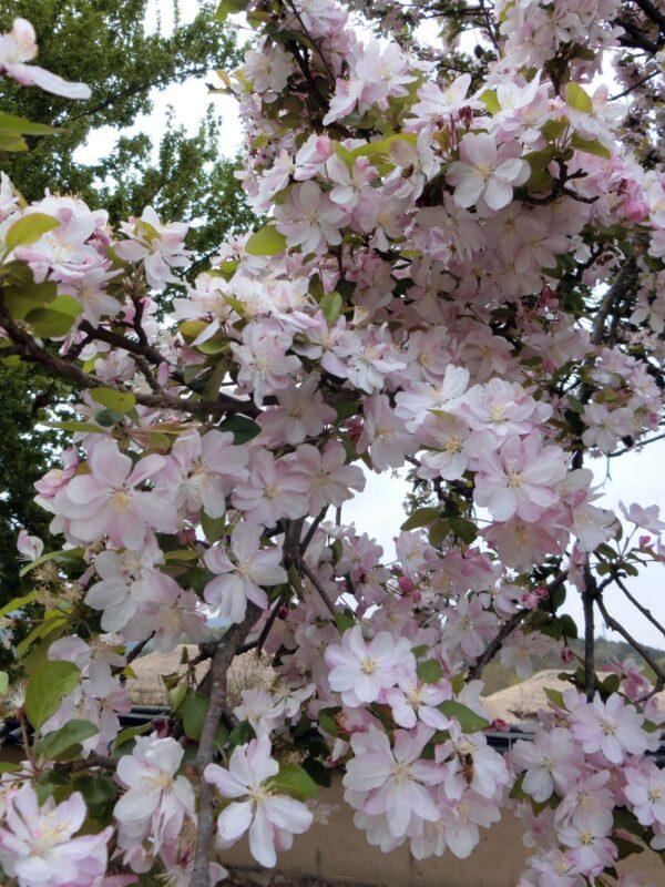 河回マウルで咲いていた花